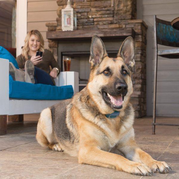 Petsafe Smart dog tréner elektromos nyakörv Bluetooth kapcsolattal 4